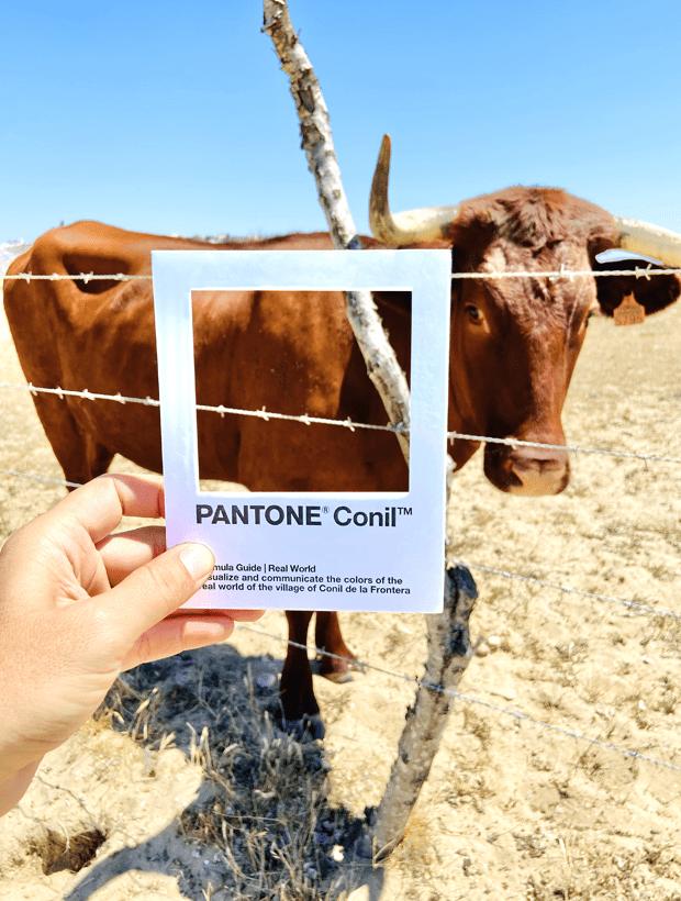 Vaca. Pantone Conil