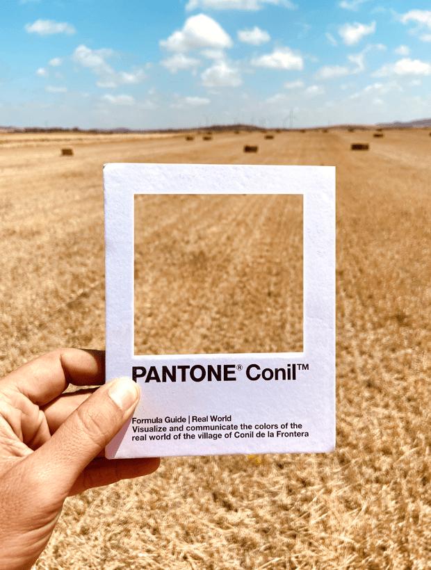 Campo. Pantone Conil